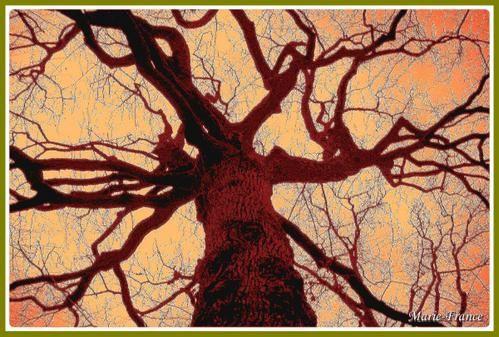 Album - Nature-Insolite
