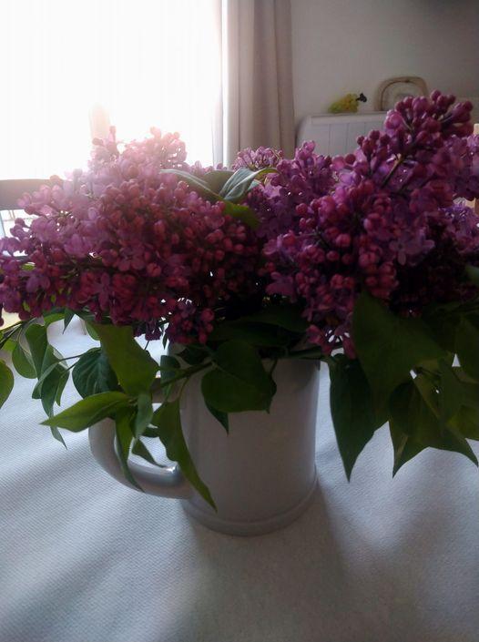 le lilas de maman !