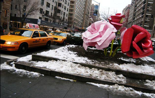 ROSES GEANTES SUR PARK AVENUE / NEW YORK / TOURISME