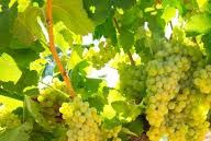 #Half Dry Champagne Producers Champagne Region France page 9