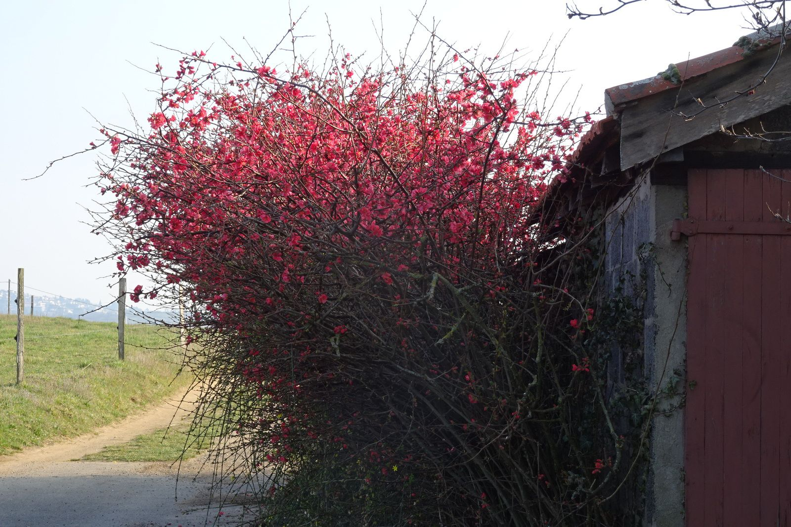 Dan n'était pas avec moi car son amortisseur est en révision. Pour finir la sortie en beauté, le soleil se lève enfin et magnifie cet arbuste fleuri.