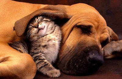 S'entendre comme chien et chat...