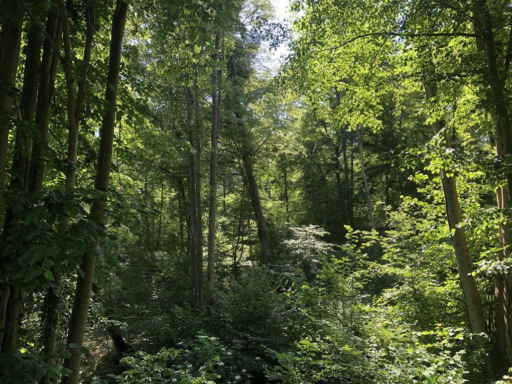 Randonnée « post-confinement » dans la forêt de Coye.