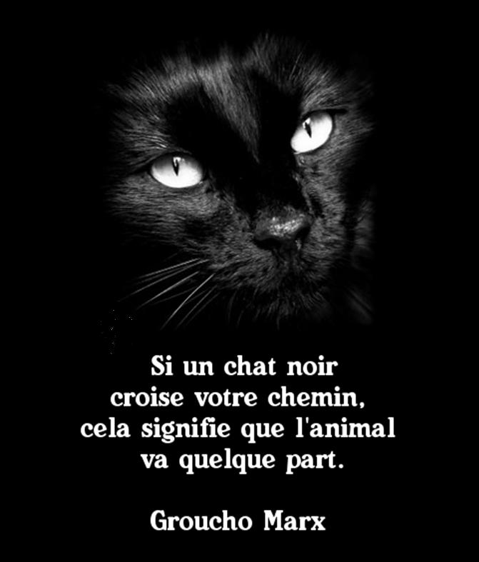AMOUR DE CHAT NOIR
