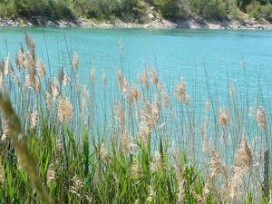 Nous voyons le lac derrière les plantes
