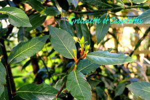 Taille de Laurier, et DIY Antimite, du Jardin à la Maison, j'ai testé le Coupe Branches à Crémaillère Fiskars