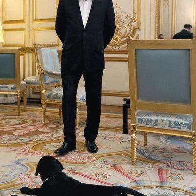 Le chien du président