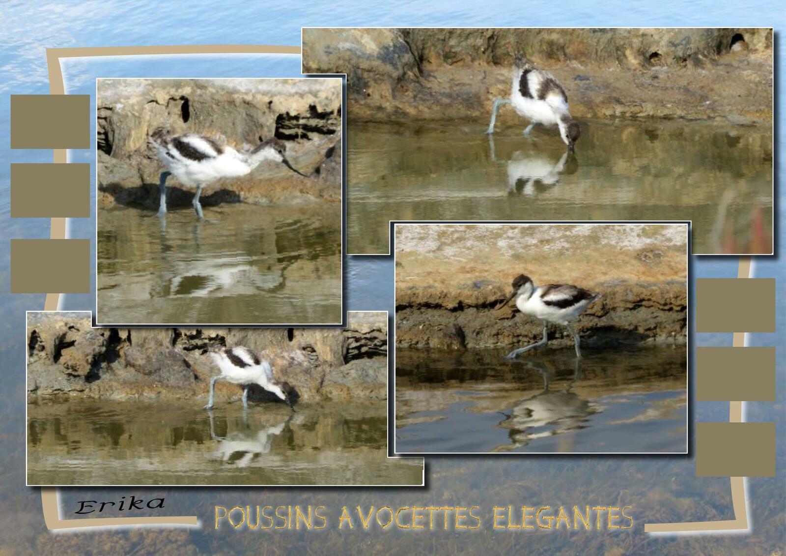 Oiseaux aux salins de la Palme...