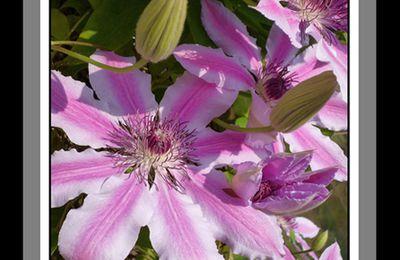 Bretagne fleurie