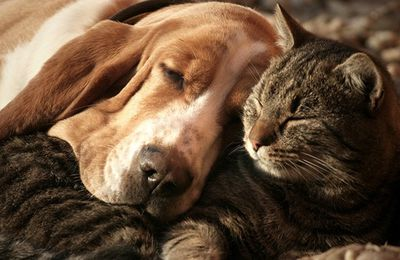 S'aimer comme chien & chat