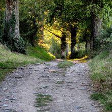 Balade autour de Savigneux (42600, Loire)