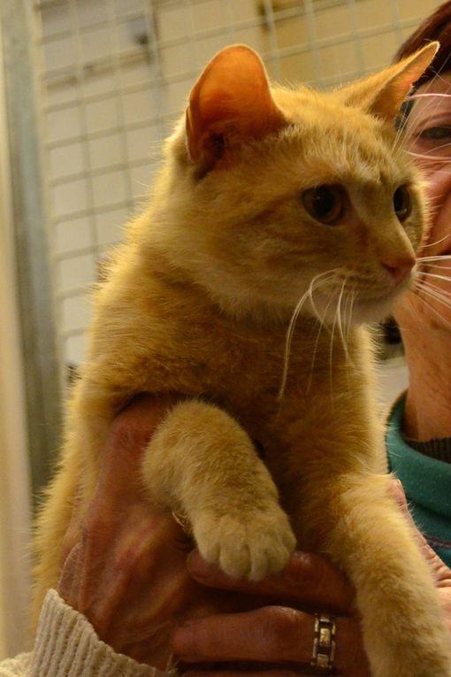 Il est adopté !!!!: WALDO, jeune mâle roux clair né en été 2016