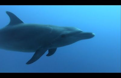 Vacances en Polynésie - Dauphins, requins et raies manta - Bora Bora - Fakarava - Rangiroa