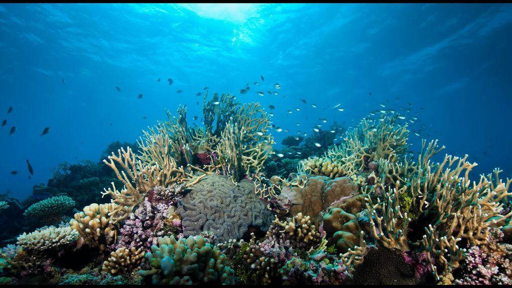 Environnement – Augmentation sans précédent de la température des océans en 2019