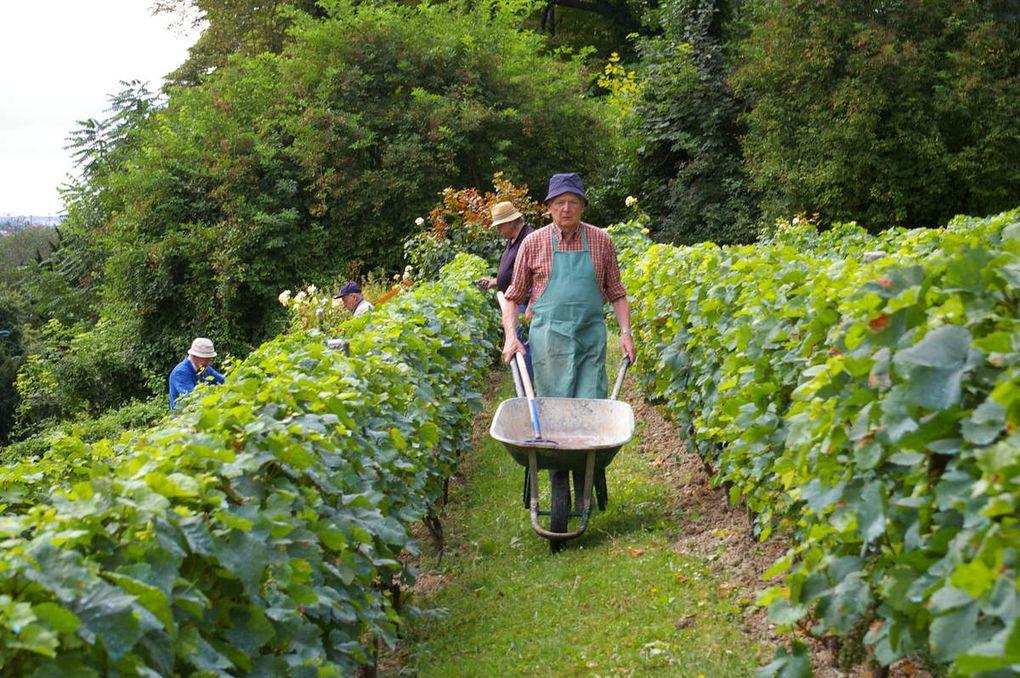 Le dernier samedi de juillet à la vigne
