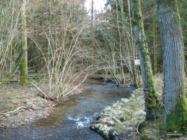 La Briante en forêt d'Ecouves tout près des rochers du Vignage.