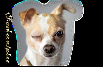 chien blanc marron clin d'oeil!!(tube misted)