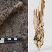 DNA from 1,600-year-old Iranian sheep mummy brings history to life