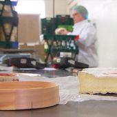 Le camembert au lait pasteurisé ne pourra pas se dire de Normandie - Le journal de 13h | TF1