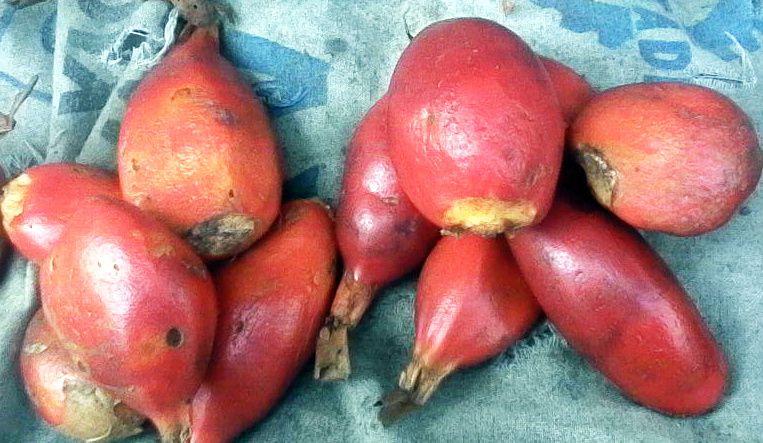 Les tondolos. Photo Ressources du Congo