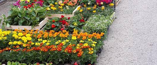 Sur le marché ou à Aubonne, l'entreprise familiale le Jardin en Fleurs fleurit votre vie !