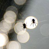 défi photo chez Dom : les contre jours - crea.vlgomez. Victoria Lynn , photographe et bricoleuse touche à tout.over-blog.com