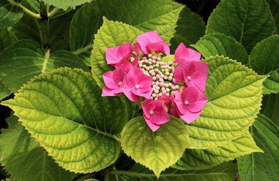 Images de Fleurs..