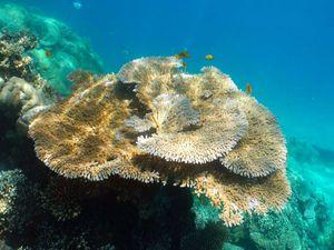 Exemples de coraux