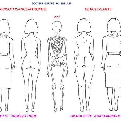 FIGURE N°5: La Silhouette Squelettique et la Silhouette Adipo-musculaire, Article n° 12