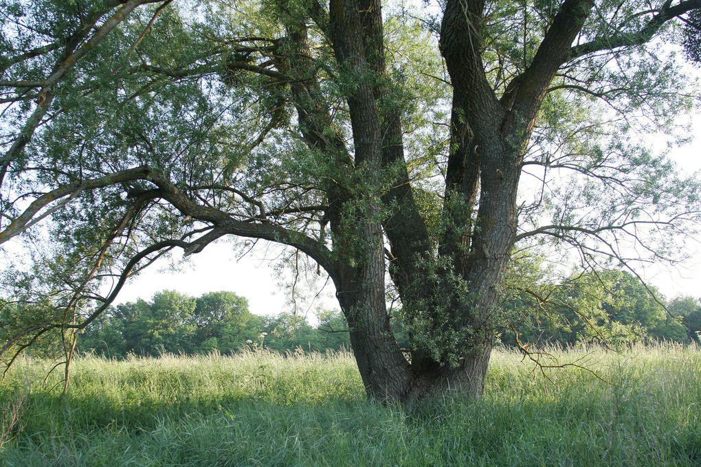 """""""En vrac"""", plusieurs centaines de photos sélectionnées des paysages de Loire, des vues des coteaux, des plaines et des bois de Latingy ; de photos des milieux, des végétaux, et des espèces animales qui peuvent être contactées sur ce territoire"""