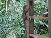 Singapour, son zoo, the river safari et plein d'autres belles surprises !
