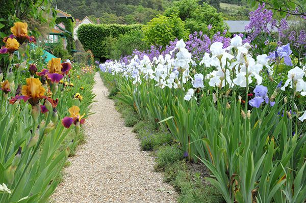 feleurs tulipes giverny jardin bernieshoot