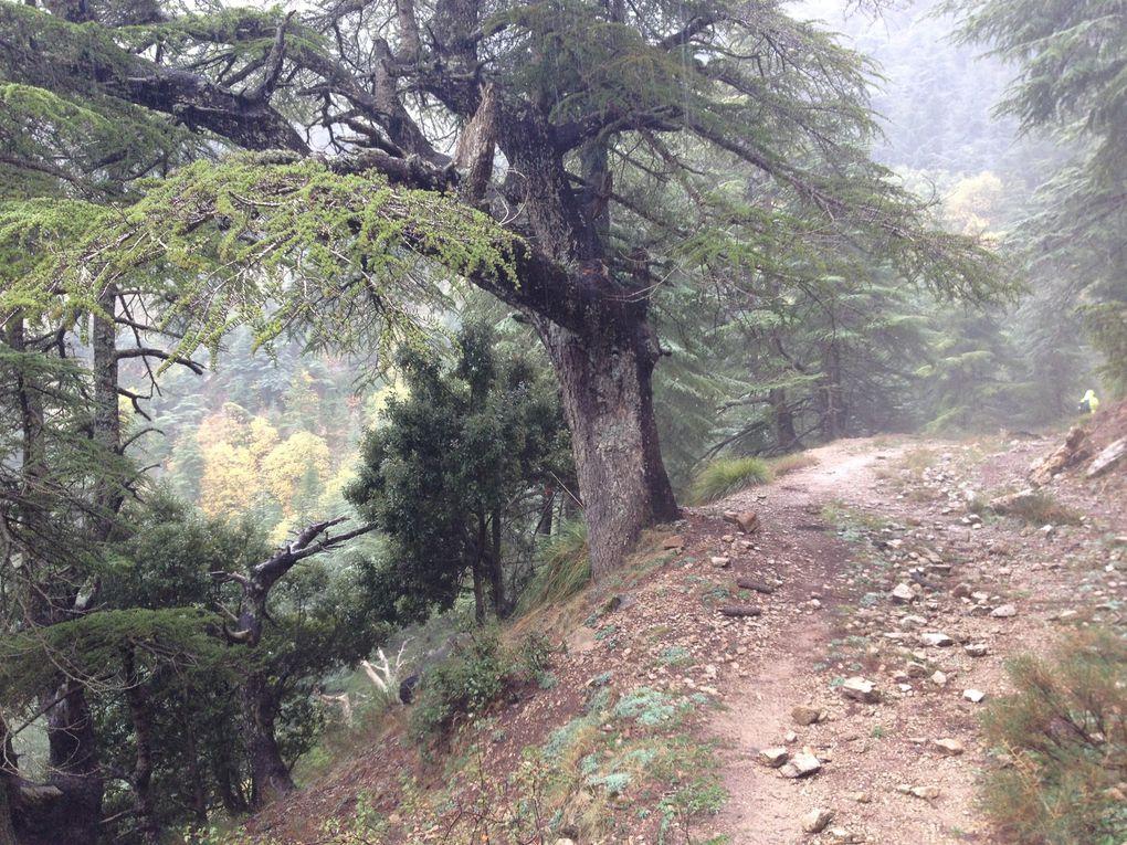 Forêt d'Aït Ouabane le, 26 octobre 2019