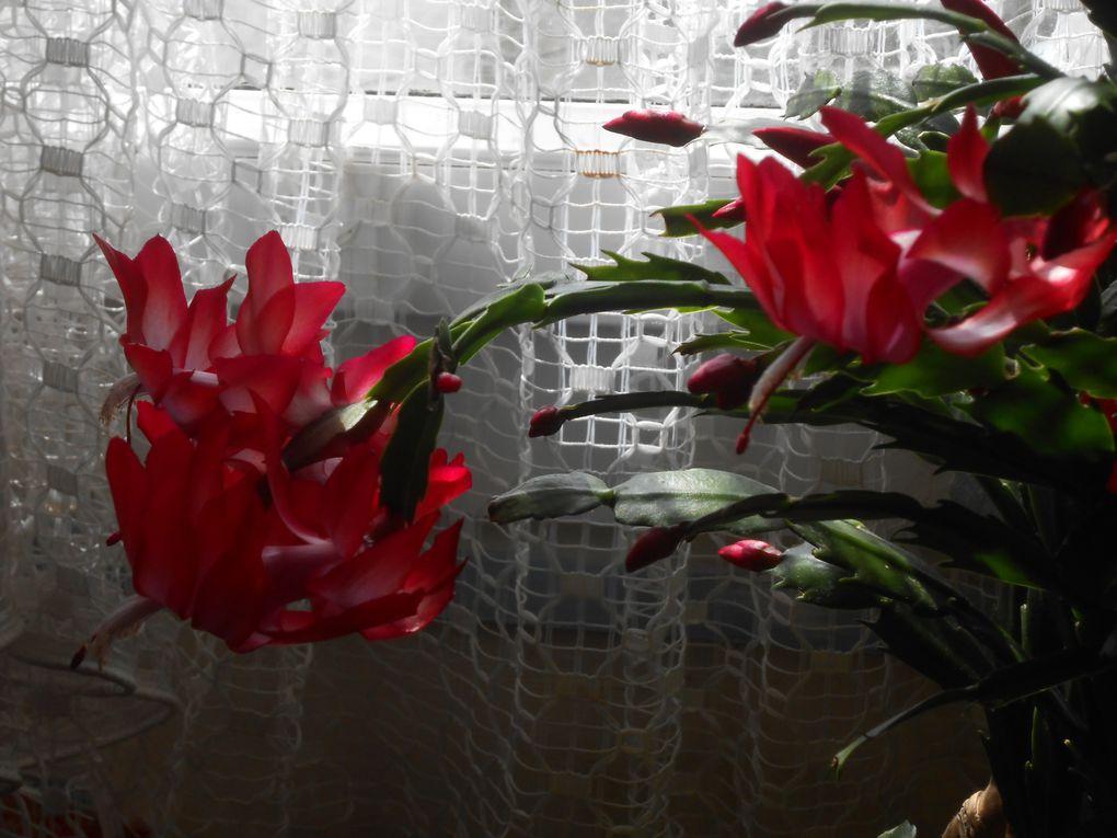 cactus d'avril
