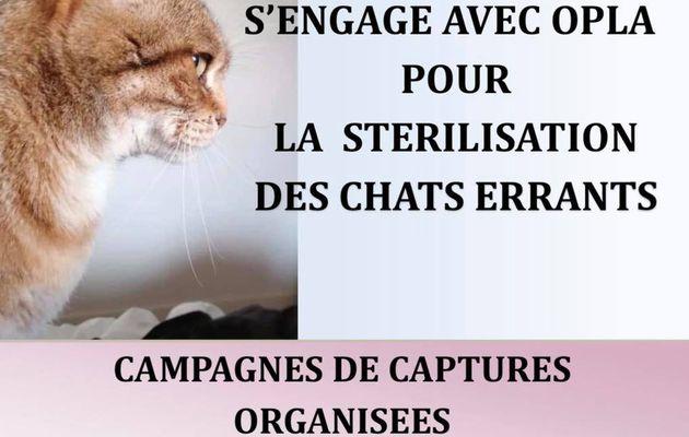 Campagne de stérilisation 2020