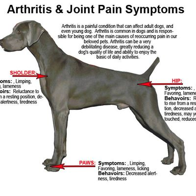 Treating Canine Arthritis