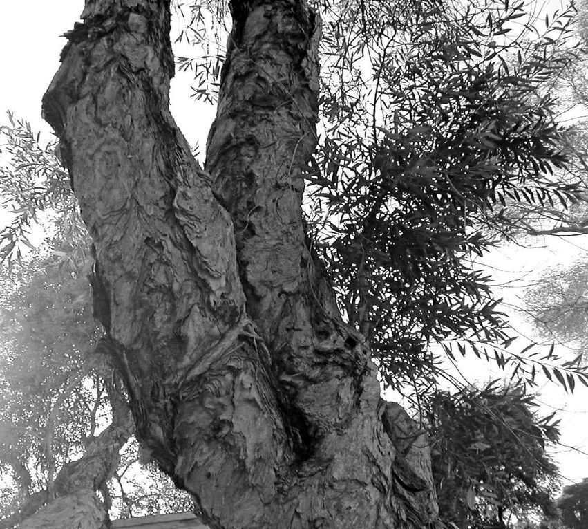 Quelques arbres, grands mages de nos forêts