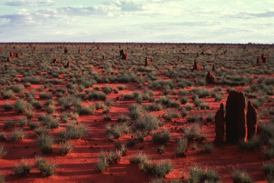 Le Mala et son territoire (images Wilkipedia). Mala est le mot warlpiri pour désigner un petit marsupial. Il a complètement disparu du désert Gibson depuis que les Warlipiri, regroupés dans les communautés de Yuendumu et Lajamanu, ne pratiquent plus le brûlis périodique qui assurait sa survie. Le territoire dont il est question dans la peinture de Bess Nungurrayi Price est une vaste étendue plate de sable et de lacs salés. Il est dit que l'ancêtre Mala voyagea à travers ce pays, créant une série de points d'eau douce, sources ou marais, qui jalonnent les pistes jadis suivies par les tribus.  L'essence spirituelle et le pouvoir du Mala sont restés parmi les termitières qui caractérisent la contrée. Bess, comme ses frères et sœurs, a hérité de la lignée paternelle, des droits et responsabilités sur ce pays.
