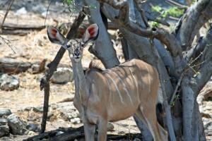 Afrique australe - Botswana : Chobe, Okavango & Kalahari