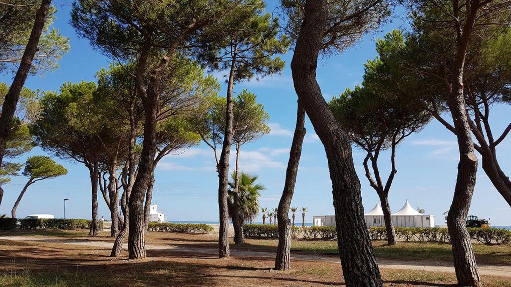 La plage d'Argelès sur Mer