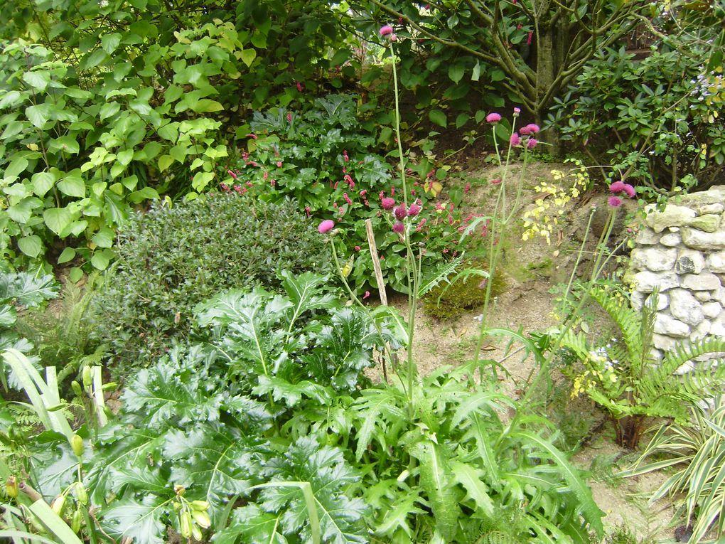 Visite en octobre 2010 du jardin d'Agapanthe un somptueux jardin en Normandie à Grigneuseville