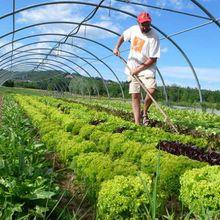 N'achetez pas de produits biologiques si vous voulez augmenter les rendements agricoles ou vous attaquer sérieusement au changement climatique
