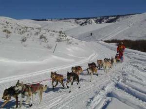 """Courses de chiens de traineau:Départ de la """"Wyoming"""" ce 26 janvier!"""