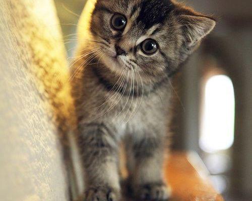 So Cute!  #cat - Cli