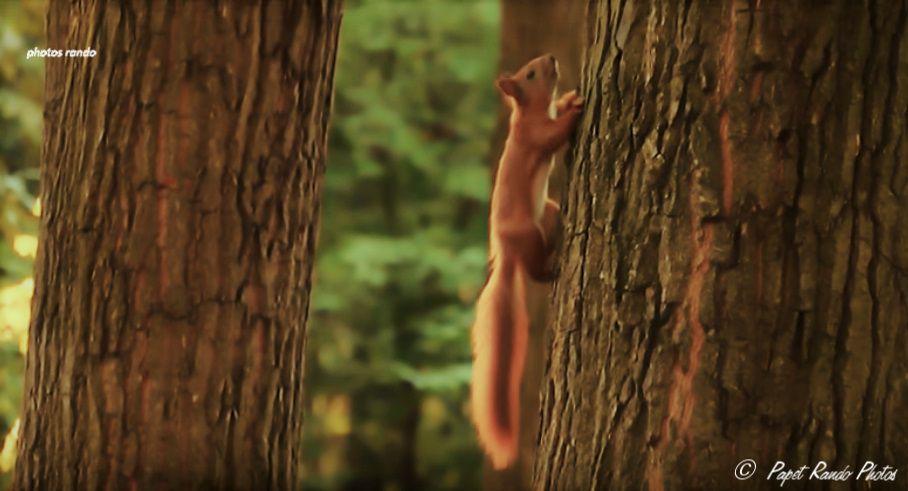 Les Ecureuils du coin en forme, au jardin, & au bois des alentours un vrai plaisir