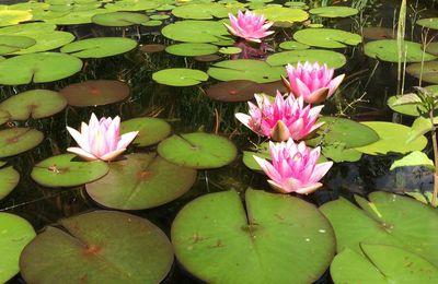 Les plantes du nouveau bassin