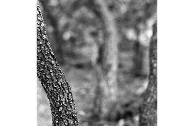 La profondeur des forêts (1)