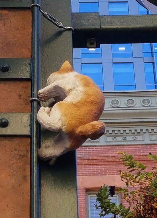 Diaporama : Les chats de Larimer Square
