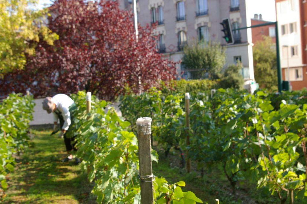 Album - 24 - Les Vendanges 2015