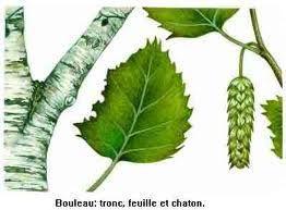 """Les plantes du """"Parco Groane"""""""